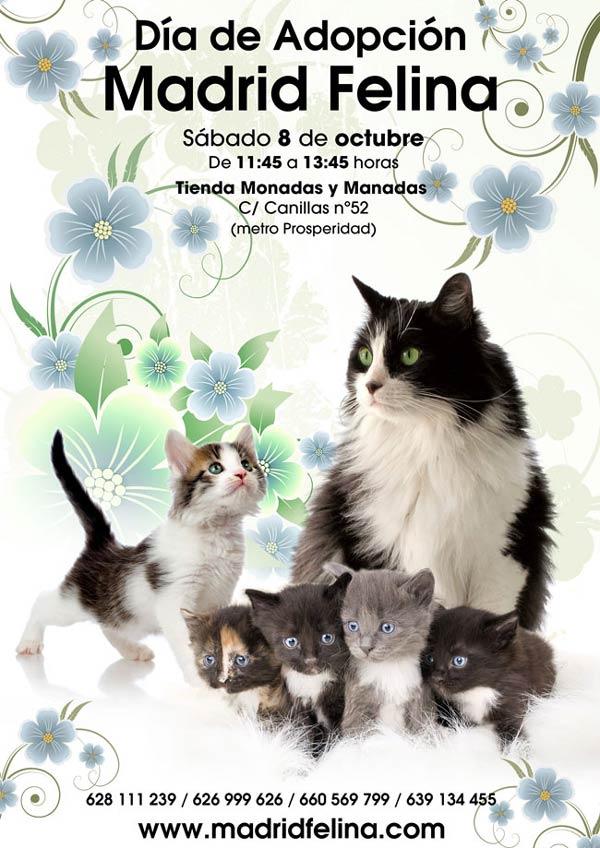 Día de Adopción Madrid Felina