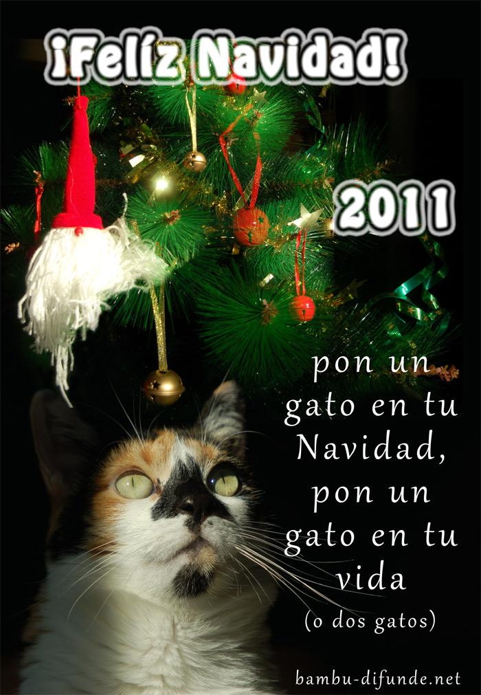 Pon un gato en tu Navidad, Pon un gato en tu vida!